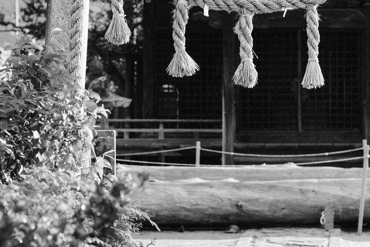 Shinto Shrine Shinto Japanese Traditional Japan God Is Here Wood Pole Japanese Shinto Shrine Suwa Nagano, Japan Sony Sony α♡Love 諏訪 八竜神社 御柱祭 御柱 Monochrome Blackandwhite