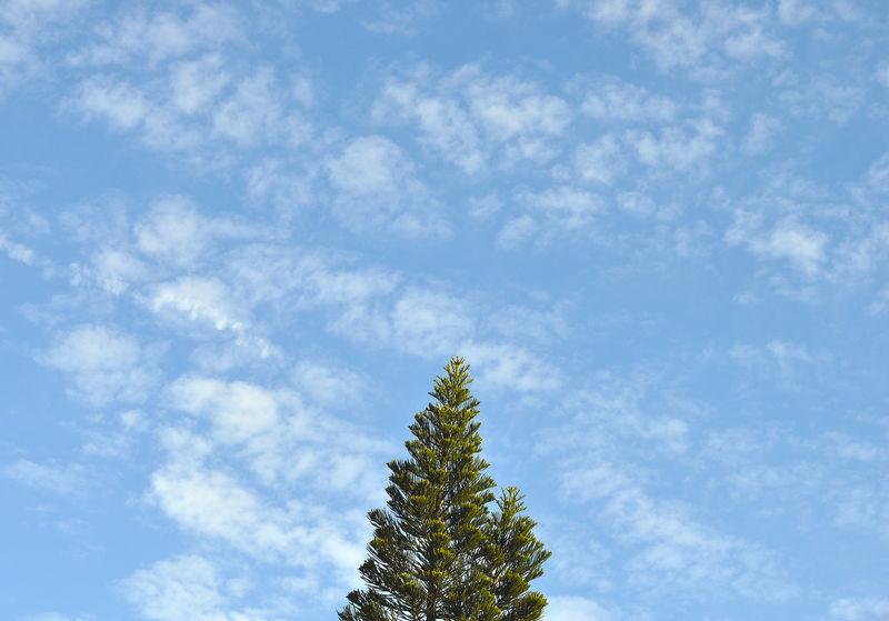 Nature Photography Pindamonhangaba Sao Paulo - Brazil Sky And Clouds Beauty In Nature Blue Sky Nature_collection Pine Tree Sky_collection Skyporn