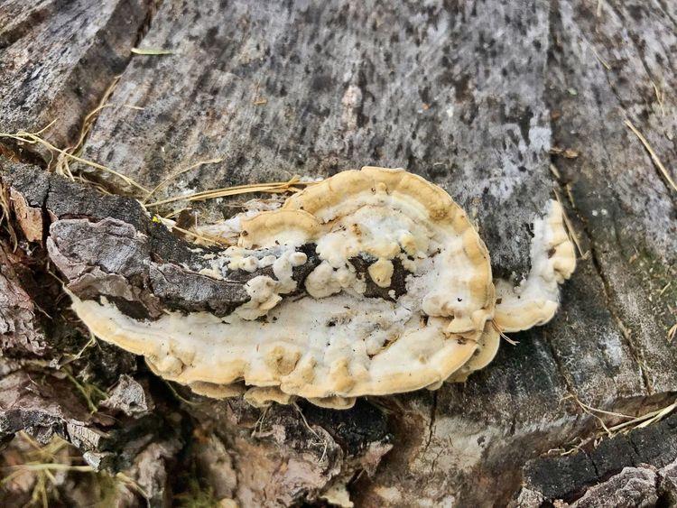 Stump Fungus Nature Close-up No People Animal Skull Outdoors Animal Themes Day Animal Bone Animal Wildlife Animals In The Wild