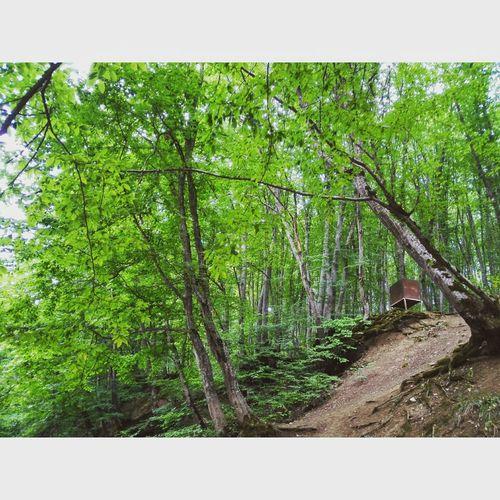 Forestwalk Alonehome Trees Amazing View Amazing Place Enjoying Life Azerbaijan Quba