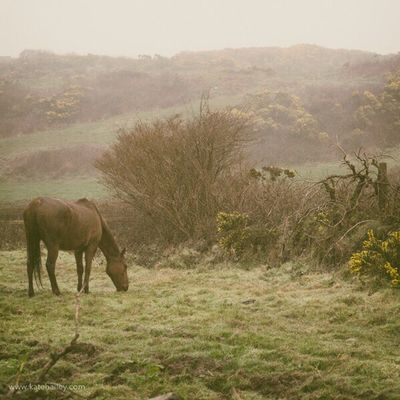 Hills, fog and horses. Just another day in Clonakilty, Ireland. Traveling The Traveler - 2015 EyeEm Awards Kateontheroad