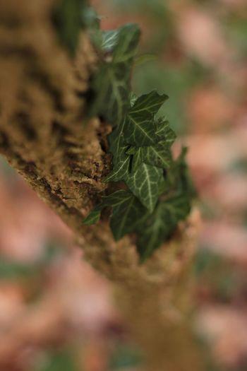 EyeEm X WhiteWall: Landscap Forest Forestwalk Wood Taking PhotosCanon550D Naturephotography Naturelovers No Filter 2015