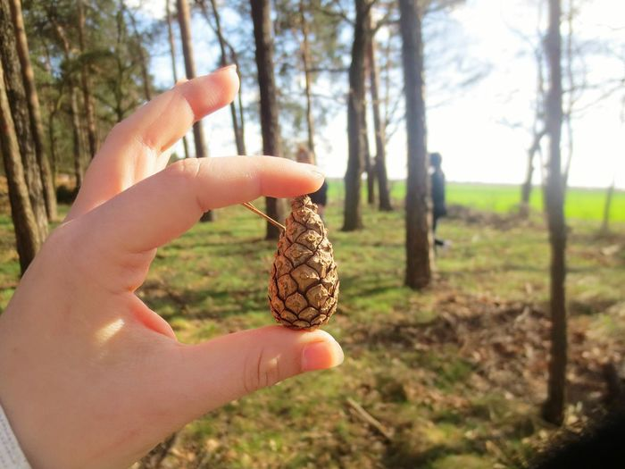 Close-up of hand holding pinecone