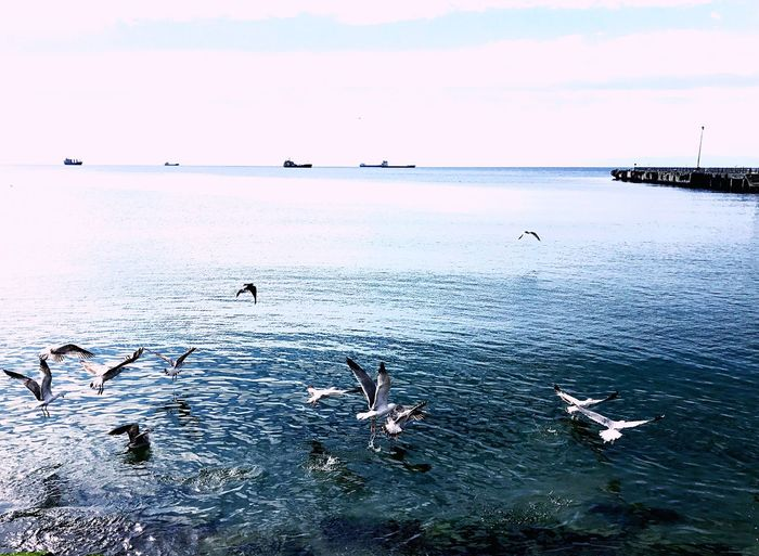 Nature Animal Themes Water Animals In The Wild Nature Sea Large Group Of Animals Bird Beauty In Nature Flying Animal Wildlife Scenics Flock Of Birds Day Sky Outdoors Horizon Over Water No People Spread Wings Togetherness Swimming Taking Photos Good Morning Turkey Istanbul