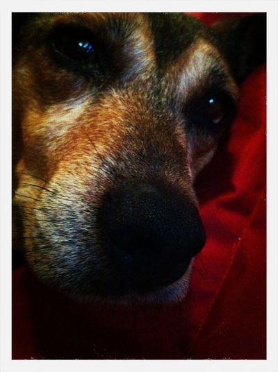 My Bella x First Eyeem Photo My Beautiful Dog Stray Dog Brown Eyes