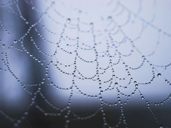 Close-Up Of Water Drops On Cob Web