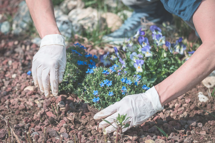 Springtime home gardening, planting flowers in soil Bride Close-up Day Field Groom Human Body Part Human Hand Human Leg Lifestyles Low Section Men Nature Outdoors Real People Togetherness Two People Women