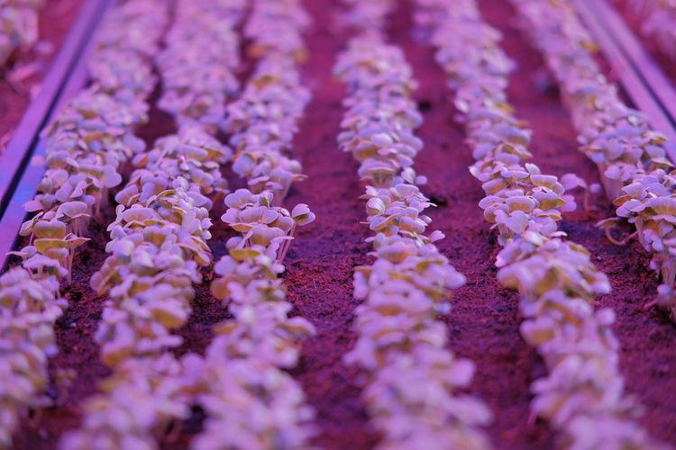 Full frame shot of purple flowers for sale