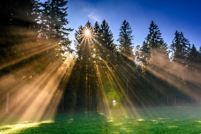 Beauty In Nature Day Fog Forest Grass Green - Golf Course Nature No People Outdoors Sky Sunbeam Sunlight Sunrise Sunset Tree Water Wood