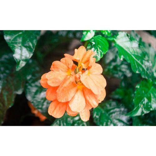 Serenidad, tranquilidad... - Macroexperience Flower Flowersgram Florecitas_mx -