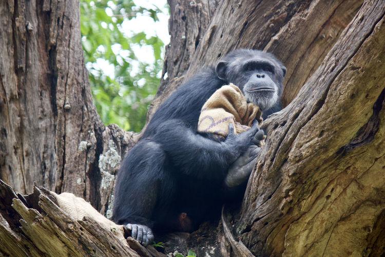 Ae sitting on tree trunk