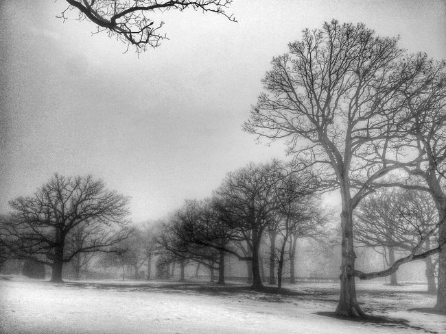 Trees and snow Black And White Black & White Nature EyeEm Best Shots - Nature EyeEm Nature Lover Hugging A Tree Landscape Tree Fog Eye4photography  Nature Photography Foggy Foggy Weather Foggy Morning Tree_collection  Full Frame Backgrounds Blackandwhite Black And White Photography Scenic Moody Grainy Scenic Landscapes Scenery Shots Nature_collection