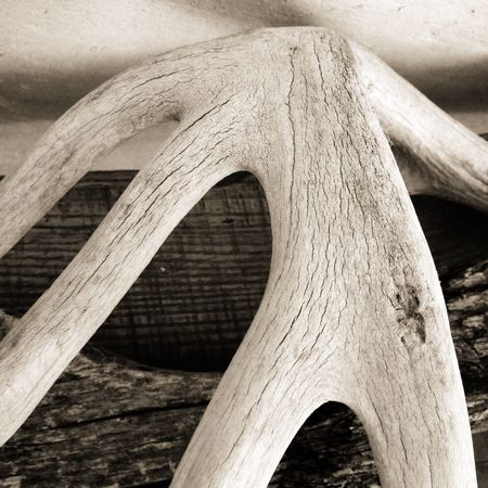 Bone Bridge Dreaming Archetype Mystic View Chasing The Muse