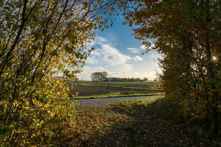 EyeEm Best Shots Tree Cloud - Sky Autumn Tranquil Scene Landscape Bushes And Trees Sony A77ii Zeeuws Vlaanderen Zeeland  The Netherlands Morning Light See-through