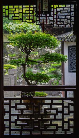 Bonsai tree through the door view
