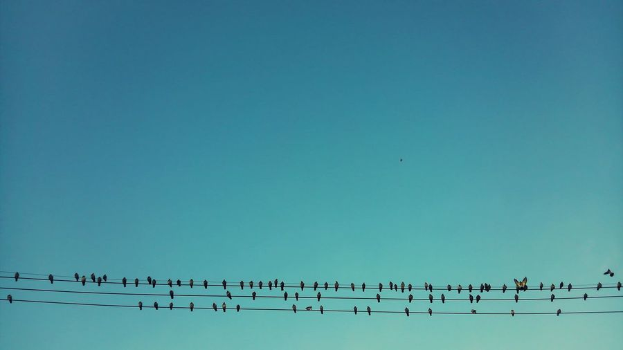 Birds perching on electric cable against sky