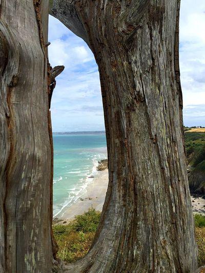 Arbre Mort Arbre Mer Sea Dead Tree l Clouds Nuages Littoral Storm Sky Storm Ciel D'orage Ciel Orageux Ciel Sky And Clouds Sky Ciel Et Nuages Beach Plage Bretagne Brittany