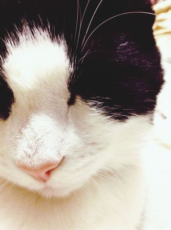 Lily ^.^ Cat EyeEm Best Shots Kitten Eye4photography