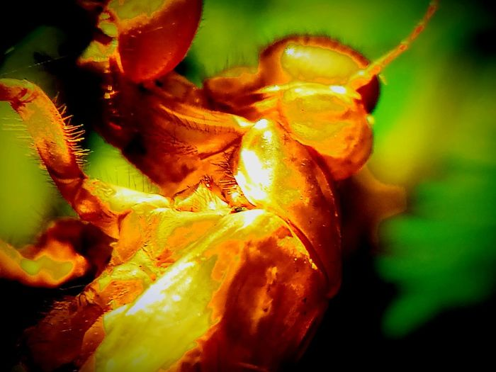 Died Insect Beauty In Nature Close-up Day Focus On Foreground Fragility Nature No People Orange Color Selective Focus