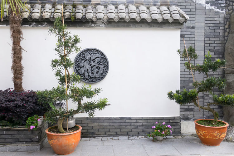 Chinese garden style with copy space on wall Plant Potted Plant Architecture Growth Built Structure Nature Day No People Wall - Building Feature Building Exterior Flower Flowering Plant Tree Outdoors Building Flower Pot Beauty In Nature Window House Front Or Back Yard Houseplant Well  China Garden