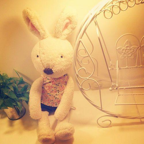 Bunny 😍😍😚😚 LeBunnyBleu Bunny  Thegardensmall