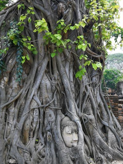 Root and tree