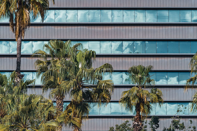 Palm trees by swimming pool against building