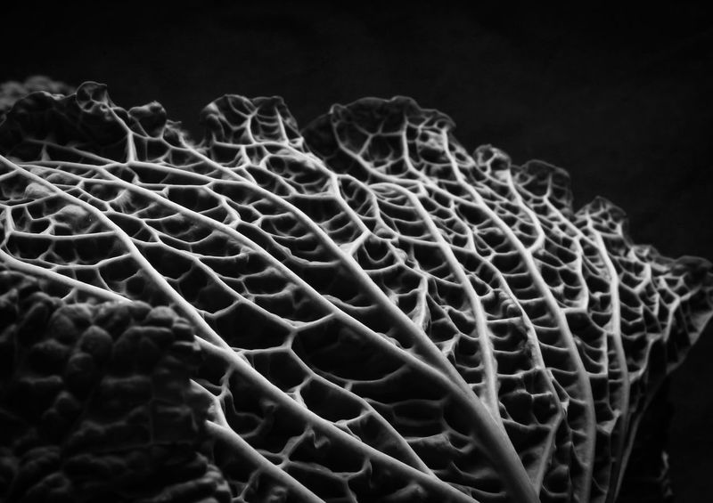 Textured  Nature Close-up Canon Blanco Y Negro Bw Bw_lover Blackandwhite Photography Bwphotography Canon_official Canoneos1100D Amateurphotography Canon_photos Passionphotography Canonphotography Canon1100d Canoneos Canon Photography Fragility Bw_collection Texture Flash FlashingLights