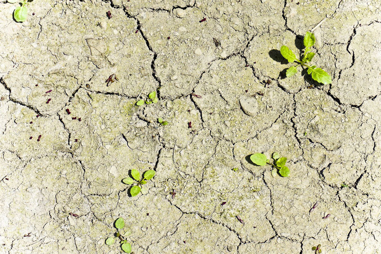 Arid Climate Backgrounds Close-up Cracked Day Drought Environment Environmental Issues Field Full Frame Global Warming Growth Land Landscape Mud Nature No People Outdoors Plant Summer Textured  ひび割れ 枯れる