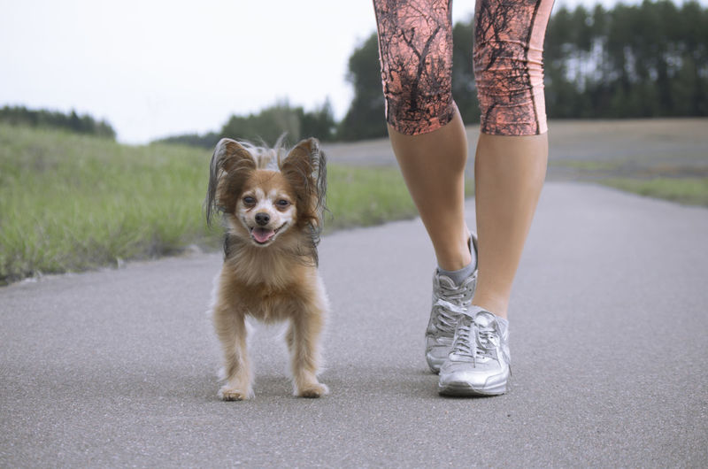 Low Section Of Woman Walking With Dog On Road