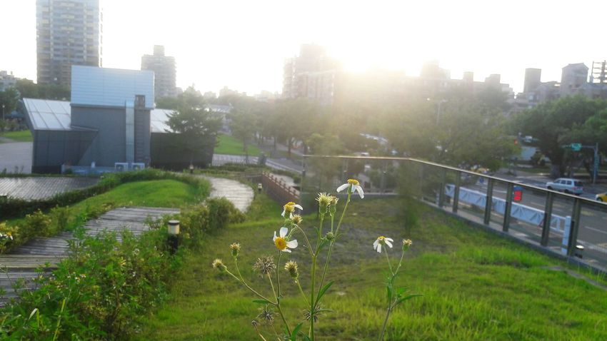 City Architecture Built Structure Building Exterior Grass No People Outdoors Tree Skyscraper Day Cityscape Flower Urban Skyline Sky