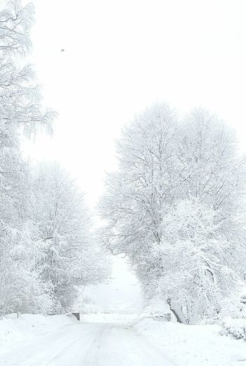 Frost Trees White Snow Winter Cold Temperature Snowing Tree Nature Pine Tree Frozen No People Polar Climate Outdoors Beauty In Nature