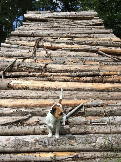 One Animal Outdoors Nature No People Wild Woodpile Stack Firewood Log Timber Shapes In Nature  Shapes And Forms