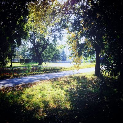 Autumn осень Omsk город