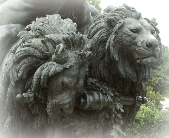 Bronze Lio Bronze Sculpture Bronze Statue Close-up Lions Lions Head Sculpture Statue