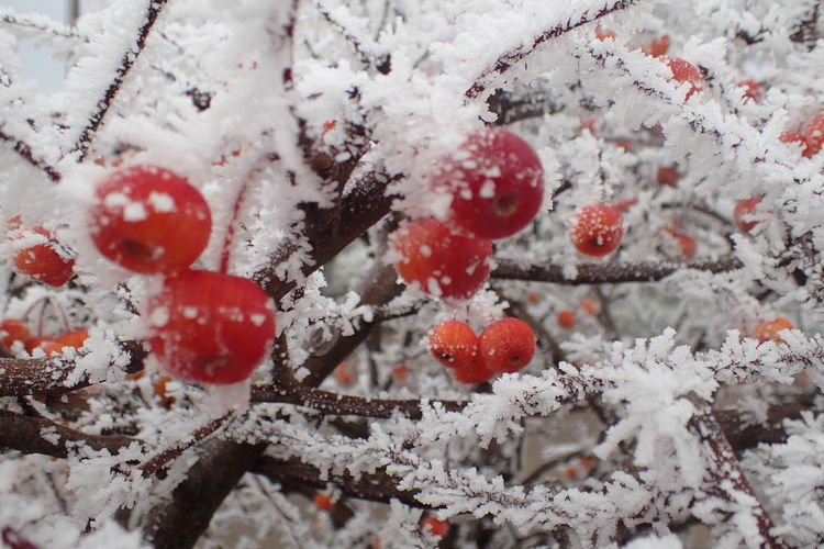 Close-Up Of Berries Against Sky During Winter