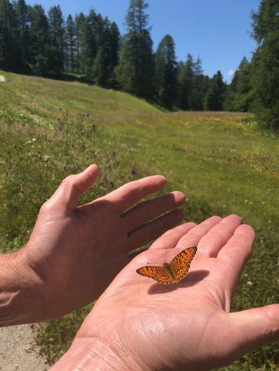 Papillon Human