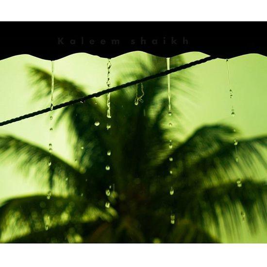 Finally rain in belgaum!!!! ❤❤😍😍 Rain Love Belgaum  Instagram Inatagramhub Instagood Instacool Instamood Picoftheday Photooftheday Leaf Drop_perfection Myindiacnn CNN @cnn Macro_brilliance Nature_brilliance Myblr