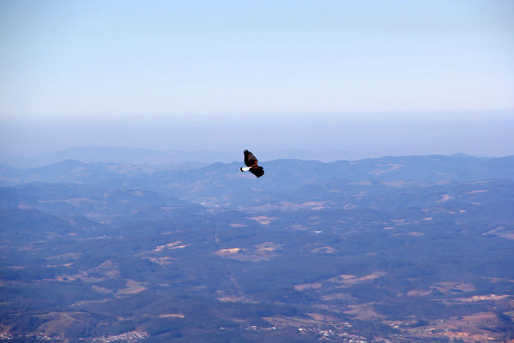 High angle view of bird flying in mountains