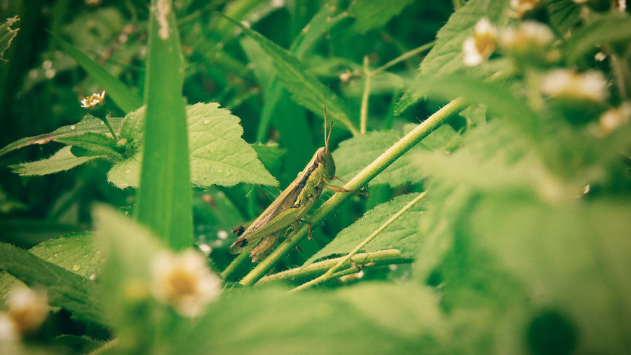 Beauty In Nature Close-up Field Freshness Glasshopper Green Color Leaf Leaves Nature Outdoors Plant EyeEmNewHere