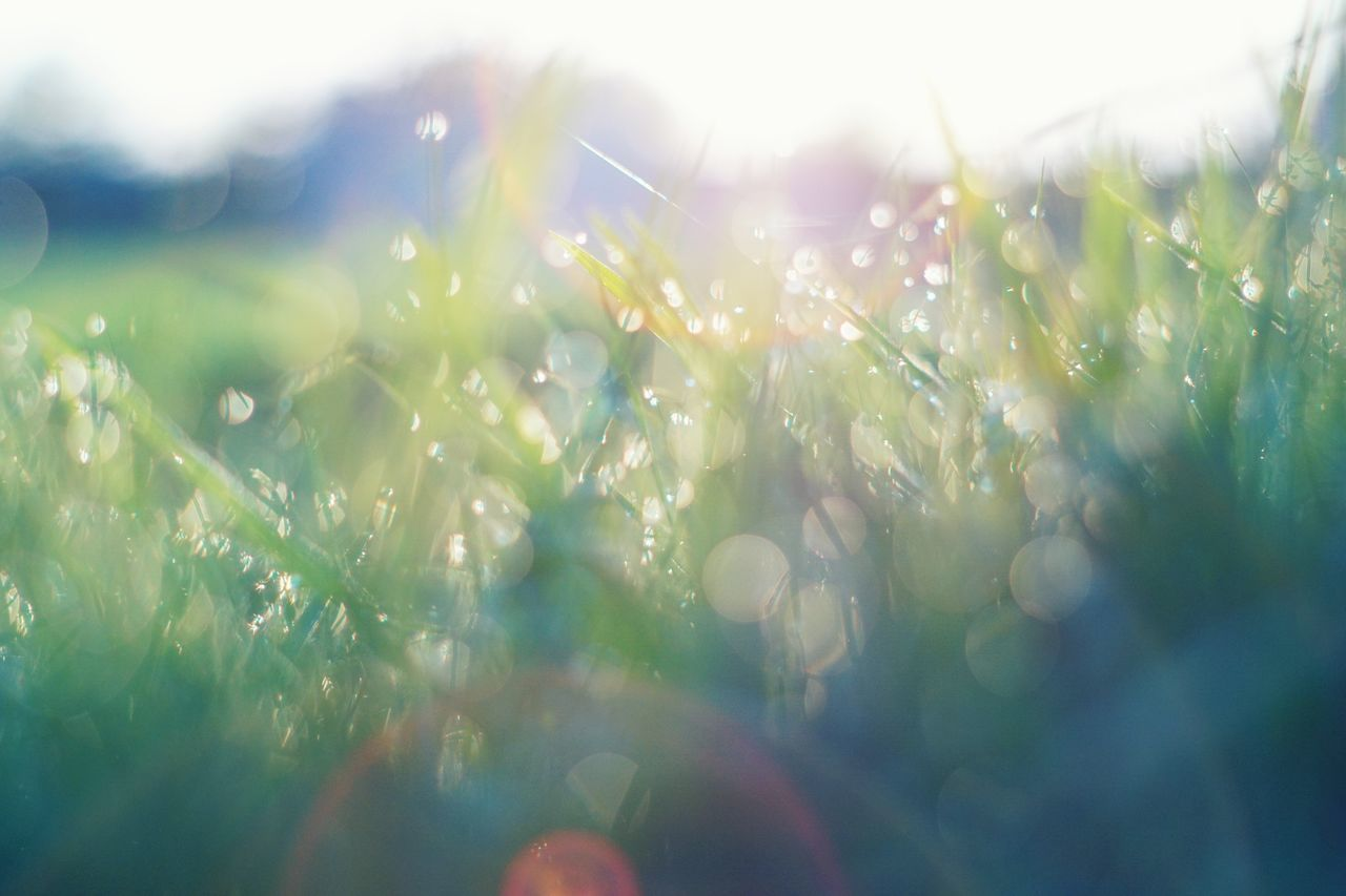Close-Up Of Water Drops On Grassy Field