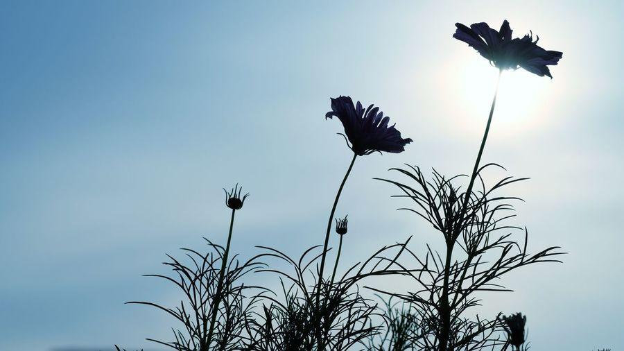 Garden Sun Life