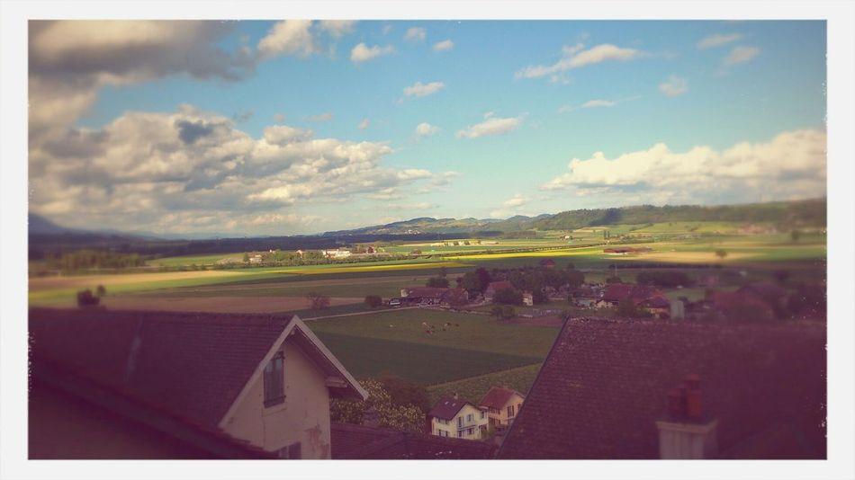 Swiss Morning Walk City Landscape #Nature #photography