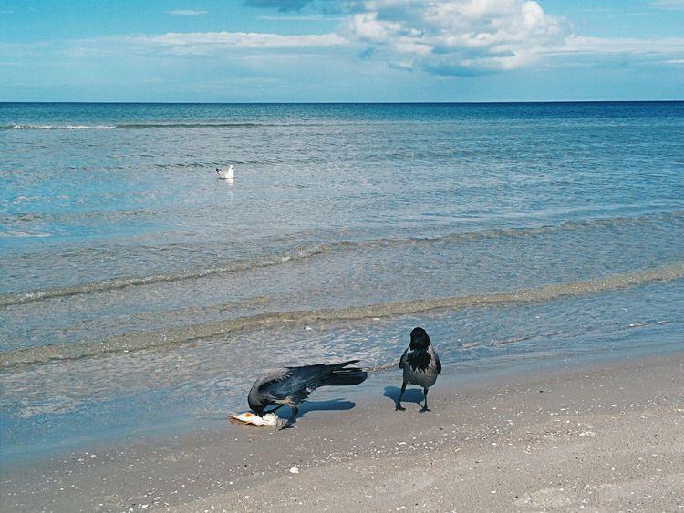 Beachlife Birds Fish What's For Dinner?