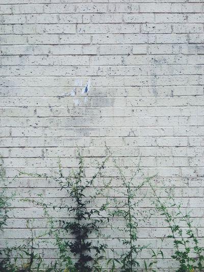 Wall Brick Wall White White Bricks Plant Minimal Minimalism Lines Nature Green Plants