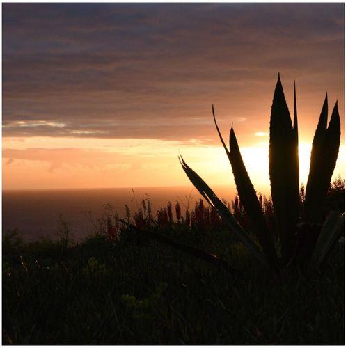 Sunset Growth