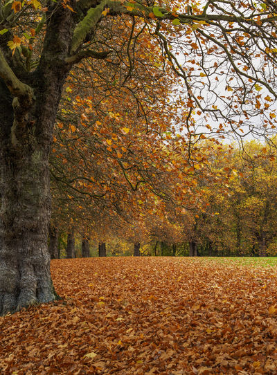 Autumnal colours in Sefton Park Liverpool Autumn Autumn Autumn Colors Autumn Leaves Beauty In Nature Change Leaf Nature Scenics Tranquility Tree