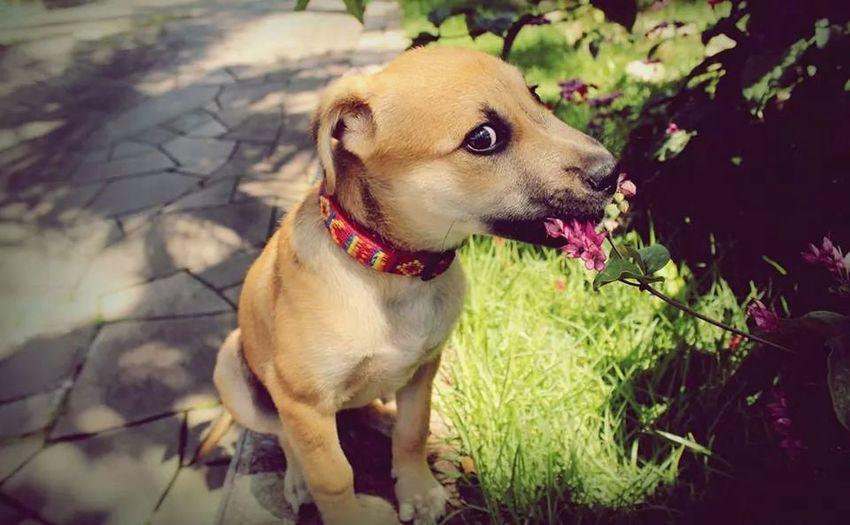 nhacc! Dog Cãozinho Fofuxinhomeu