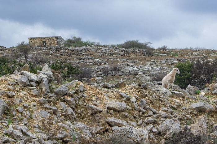 Abandoned Architecture Balance Built Structure Cloud - Sky Crete Focus On Foreground Greece Landscape Layers Learn And Shoot: Balancing Elements Low Angle View No People Outdoors Rock - Object Sheep Sky Tranquility Vanguard Waiting Watchman