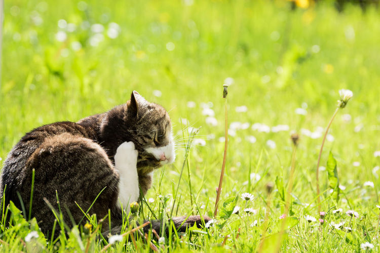 View of a cat on field